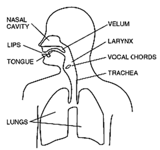Gemini 2013 mantrams silence speech etheric great invocation httpingritingolfsonogramspeech organs ccuart Gallery