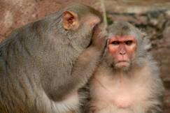 http://blog.7pmanywhere.com/wp-content/uploads/monkey-secrets.jpg