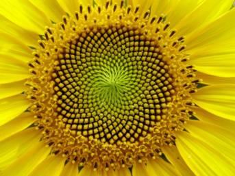 http://i1238.photobucket.com/albums/ff495/jkred1983/sunflower.jpg