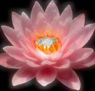http://alaynyastudio.com/wp-content/uploads/2013/04/jewel-in-lotus-shelli-todd.jpg