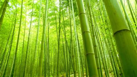 http://wallpink.com/wp-content/uploads/2013/04/Green-Bamboo-In-Forest.jpg