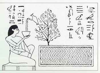 (Egypt) deceased drinking water offered by tree divinity