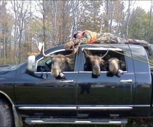Hunter becomes hunted edited