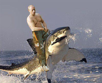 putin-on-a-shark